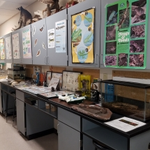 This working laboratory at AGFC's Delta Rivers Nature Center gives visitors hands-on experience with animal skins and tracks and offers tools to learn about trees, fish anatomy, and life cycles. Photo credit: Lori Monday.