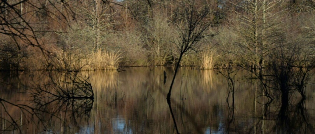 Bayou Bartholomew (view from side bank) near Pine Bluff, Arkansas. Credit: Jamie Cunningham, a native of Plum Bayou, Arkansas
