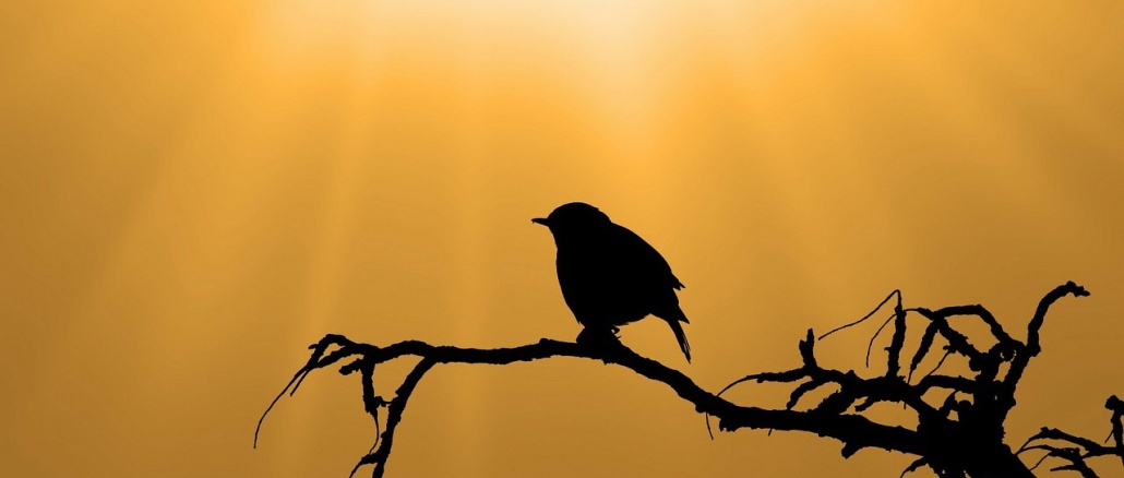 Bird silhouette against golden sky. Credit: PublicDomainPictures/Pixabay