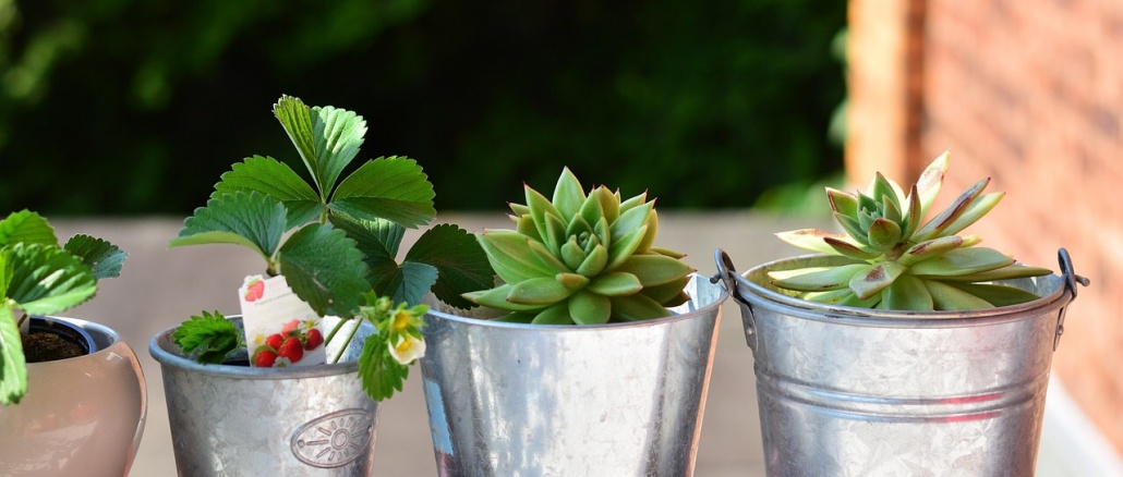 Potted plants on a balcony. Credit: Congerdesign/Pixabay Plant swap at Delta Rivers. Events and programs. Nature activities.