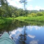 Bayou Bartholomew, View from Canoe. Credit: https://mitchwessels.smugmug.com / Mitch Wessels Photography
